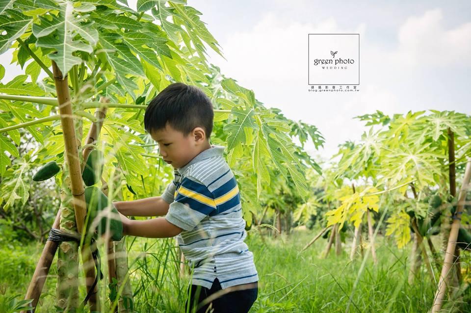 小孩摘水果